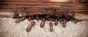 insectenbestrijding maastricht